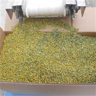 DWT茶花干燥设备
