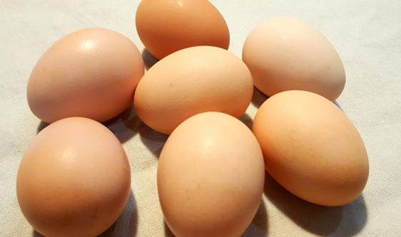 鸡蛋价格再波动 产业未来还需集中于蛋品深加工