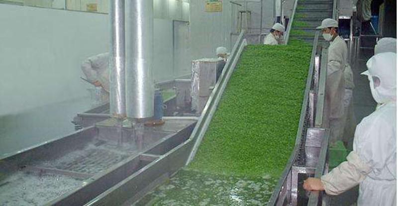 秋意正浓公司研发制造新型果蔬清洗风干流水线设备上市