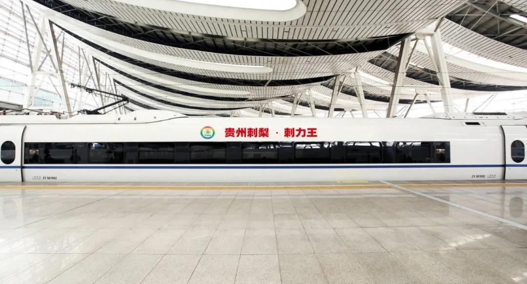 """""""贵州刺梨·刺力王""""高铁列车提醒您:天然大健康贵州刺梨饮品自西向东输送正式贯通"""