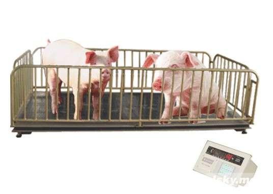 德州3吨称猪秤,3吨畜牧称大小