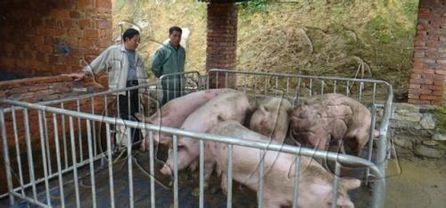 畜牧围栏秤,畜牧平台称,畜牧电子秤2吨价格